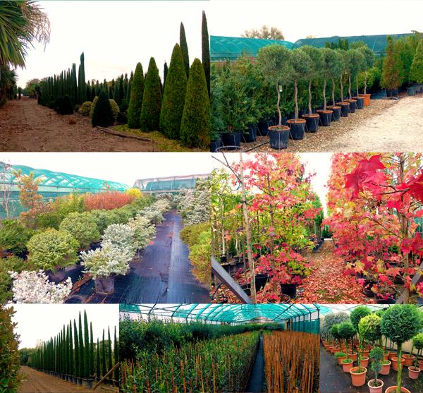 vivai-piante-abruzzese-pagina-20