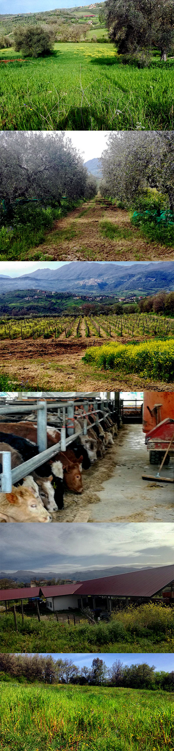 azienda-agricola-bellizio-sofia-rosa